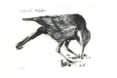 birds, seaside, etching, wildlife, cornwall