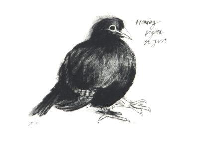 wildlife, birds, cornwall, etching