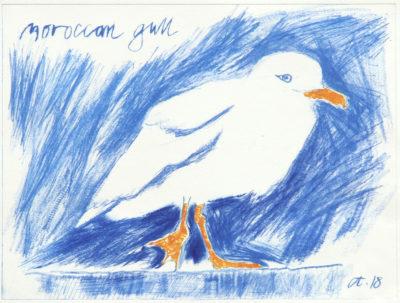 seabird, gull, Morrocan